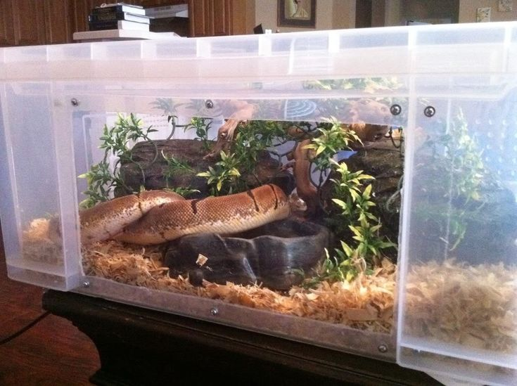 Photo 36 Jpg 1024 215 765 Tub Tank Reptiles And Amphibians