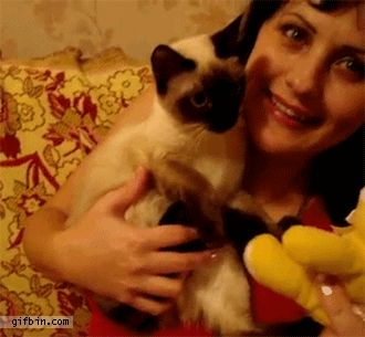 awwww Cute cute kitty