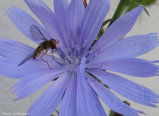 Chwile Zachwycone Oto Bzyg Prazkowany Plants Animals Insects