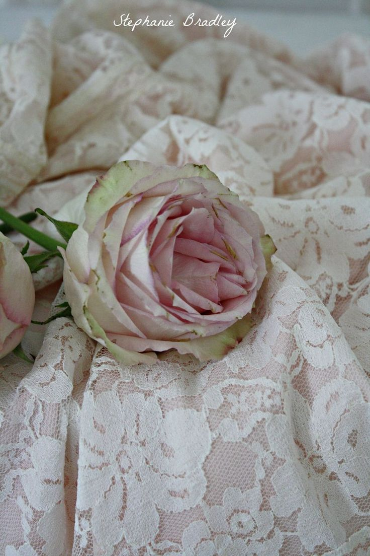 ❥ Love And Romance II Here are huge of flower collection.Order here... Free delivery 100% satisfied grantee. http://www.purplerose.ca/
