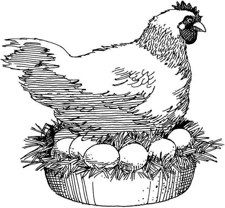 Fresh Nest~Herbs for chicken coops