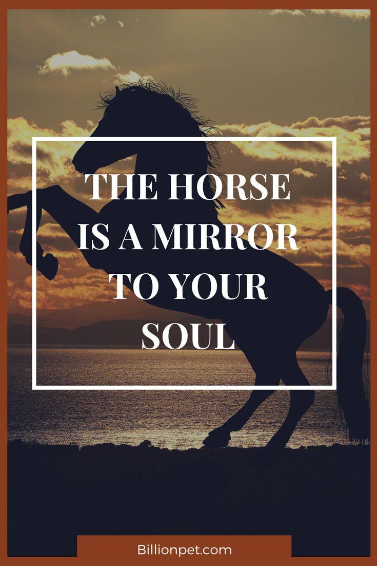 horses are awesome #horses #horseshoe