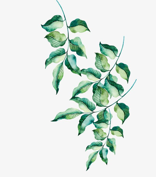 Watercolor Leaves Png Images Free Watercolor Flowers Watercolor