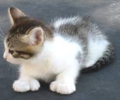 polydactyl cat - Google zoeken