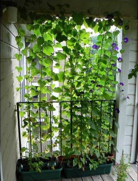 Hello there, and welcome to the blog I made to go with my garden cams.  In may of 2007, I planted some morning glory vines in planters on  t...