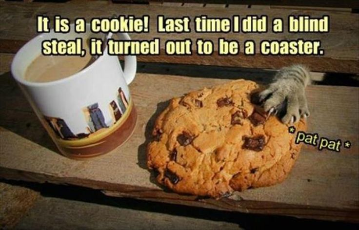 Funny Animal Pictures (17)                                                                                                                                                                                 More