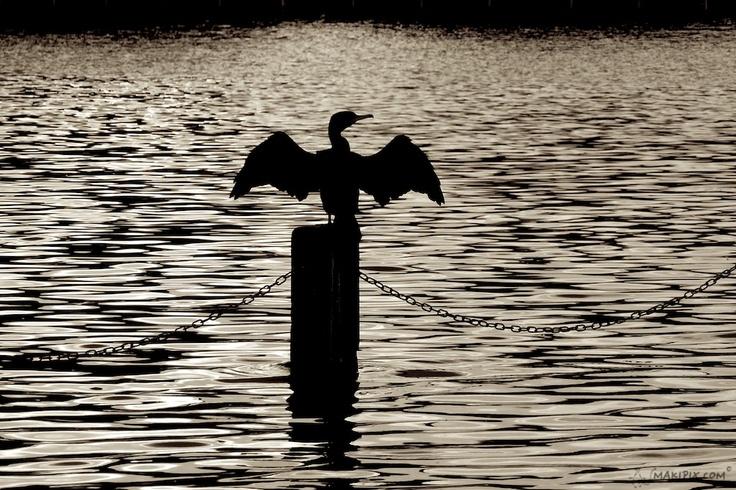 Seagull in London  http://makipix.com/en/jonathan-livingston/#left-area