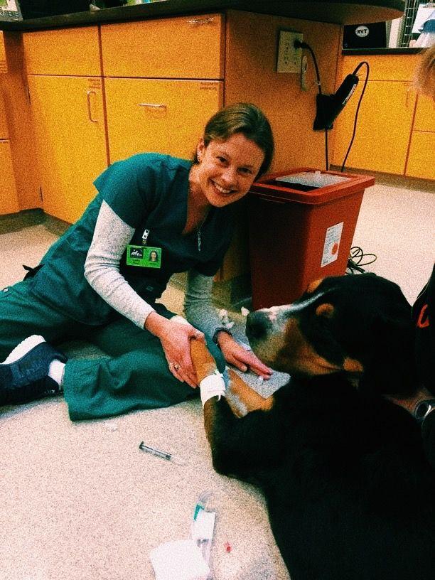 Vsco Carolinefaithhh Images Vet Tech Student Vet Tech School Vet Medicine