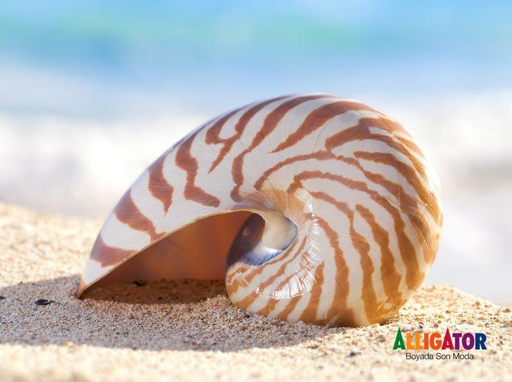 Tayvan'da yer alan Nautilus Shell isimli Hastalık Araştırma Laboratuvarının tasarlanmasında deniz kabuğunun estetiğinden ve sağlamlığından ilham alınmıştır. #DoğaEnBüyükMimar #MimariFikirler