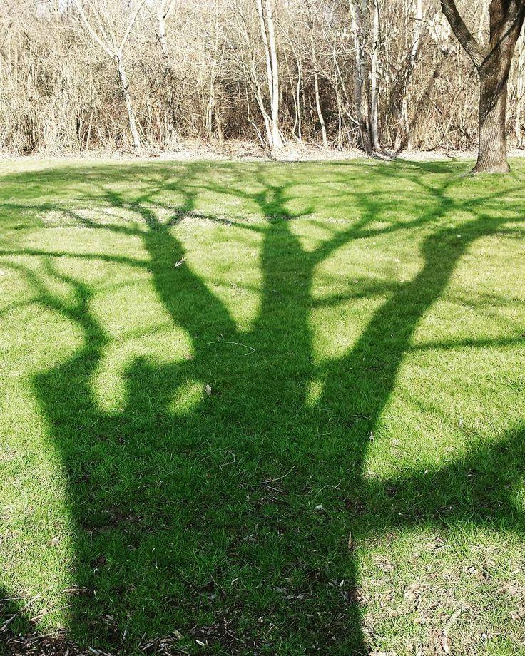 E all'improvviso #shadow #tree #boscoincittà #alberi #ombra #shadows ##trees #igclub_hdr #milano_forever #Milano #milanocityofficial #milanodavedere #ig_milan #instamilano #instamilanocity #ilovemilano #welovemilan by pakoloco