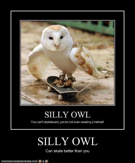 owl humor reading - photo #26