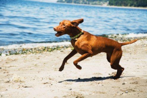 Cane che gioca in spiaggia  Dog Beach