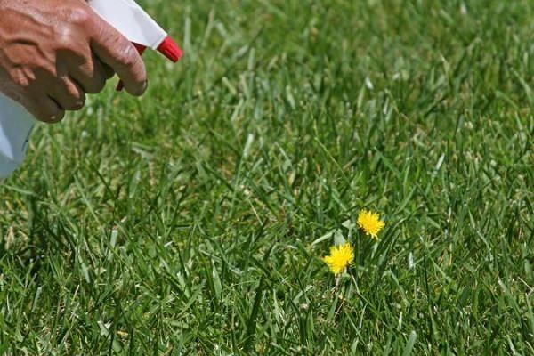 El uso del vinagre y 17 soluciones caseras contra las malas hierbas