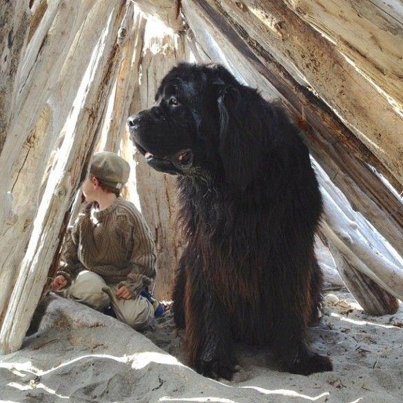 Terra Nova-  raças de cachorros para crianças