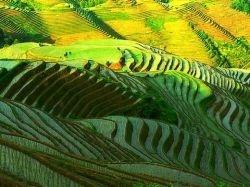 Le Vietnam, situé dans la péninsule indochinoise, est une bande de terre étirée tout le long de l'océan. Leurs paysages sont très diversifiés...