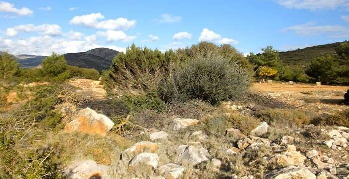 Η ΜΟΝΑΞΙΑ ΤΗΣ ΑΛΗΘΕΙΑΣ: «Αόρατοι» Έλληνες ελεύθεροι σκοπευτές