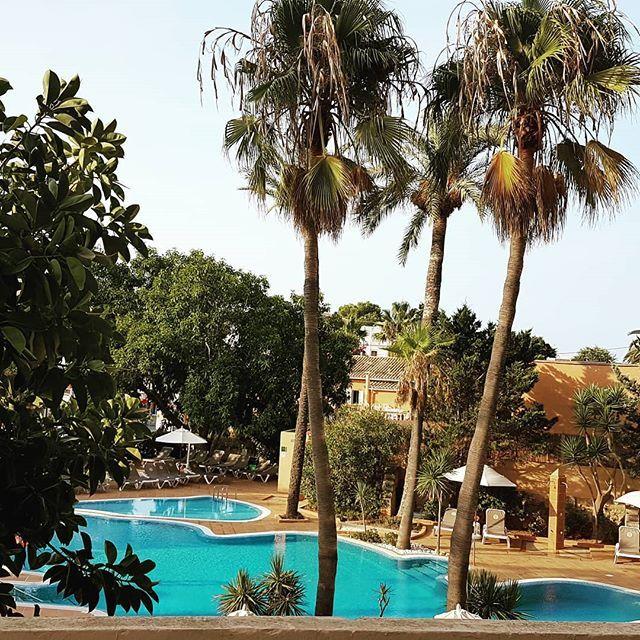 Guten Morgen Krueemel Mallorca Pool Palmen Sonne En 2019