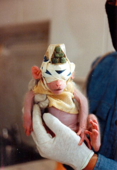 In 1985 the Animal Liberation Front raided a laboratory in the University of California, rescuing 468 animals. Including 'Britches' a five-week old macaque monkey who had been separated from his mother at birth, had his eyes sewn shut, and rigged with a sonar device as part of a study into blindness.    BASTARDS!!!!!!!  NO MORE TESTER IN ANIMALS!!!!