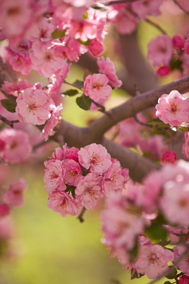 Glenwood Springs Colorado Glenwood Springs Cherry Blossom Jetsetter