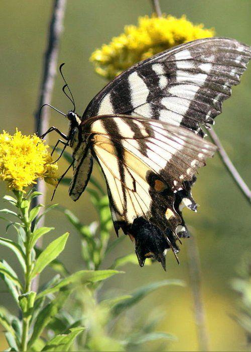 Butterfly by Travis Truelove