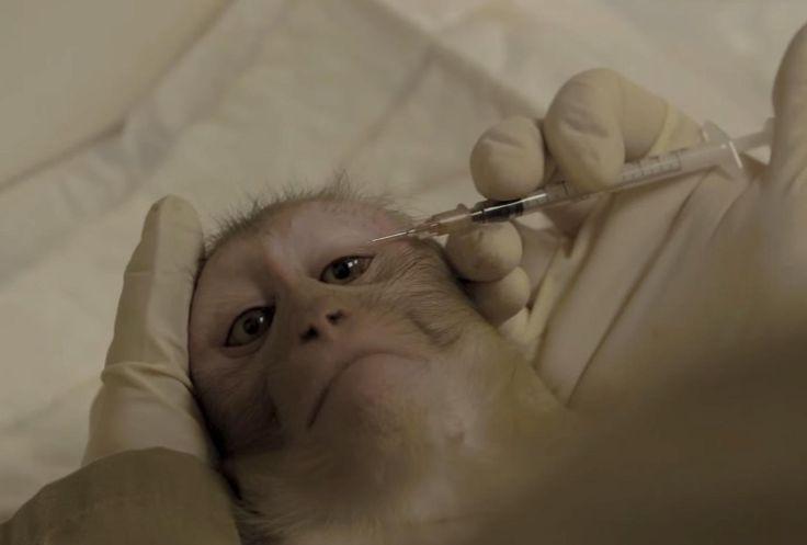 Entramos al mayor centro de experimentación con monos en Europa