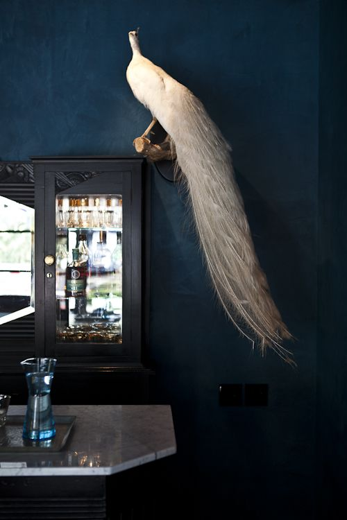 A Taxidermy White Peacock at the Hotel St. Cecilia in Austin, Texas