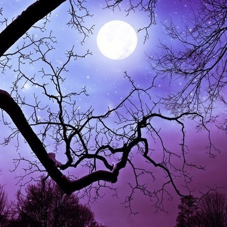 moon: Wall Decor, Fairies Tales Photography, Starry Night, Art Prints, Halloween Photography, Purple Photography, Full Moon, Jewels Tones, Night Sky