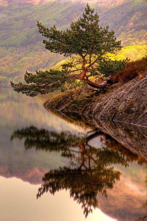.: Scotland, Natural Photography, Loch Lomond, Trees, Mirror Image, Places, Pine, Bonsai, Mothers Natural
