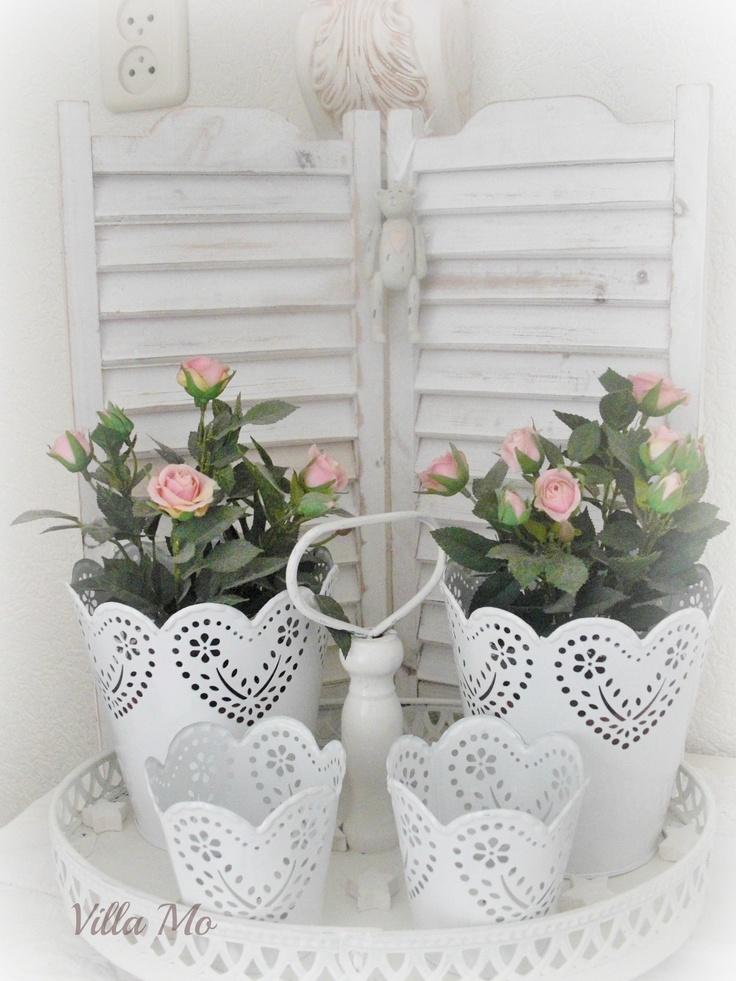 Lovely little roses