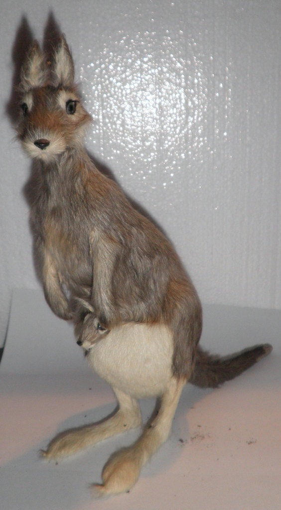 Kangaroo Made from Real Kangaroo Fur - Early Australian Souvenir