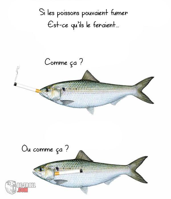 Si les poissons pouvaient fumer... - Be-troll - vidéos humour, actualité insolite