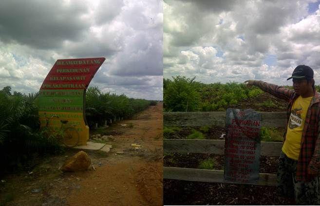 Indro menunjukkan lahan yang diserobot PT. RJP./adri