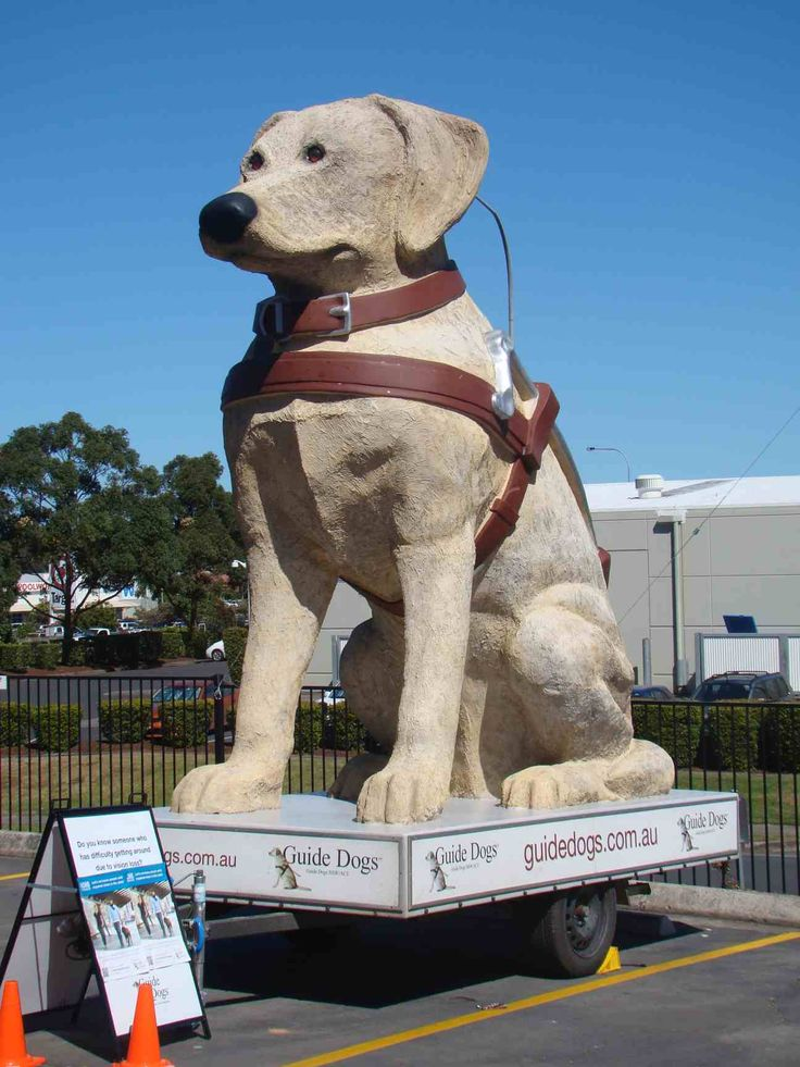 Guide Dog-In Coffs Harbour  NSW