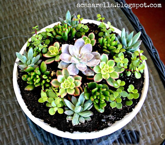 Plant succulents altogether in one pot/bowl