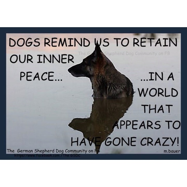1000 Images About German Shepherd Quotes Sayings