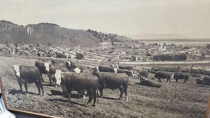 Taylor Ranch in Ventura, California.