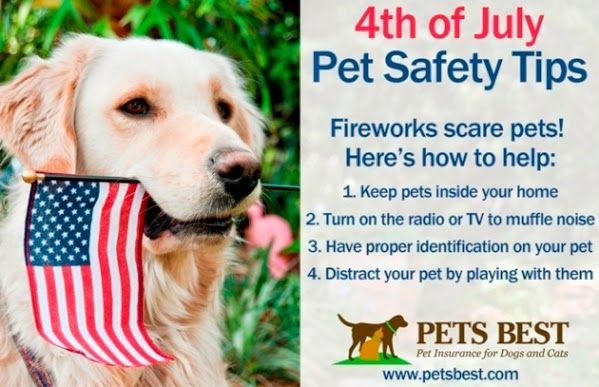 Fireworks Frighten Our Pets Prevent Your Pets From Running Away This July 4th Follow These Tips 1 Keep Pets Insi Pet Safety Big Dog Care Best Pet Insurance