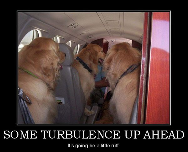 Can My Dog Fly With Me On American Airlines