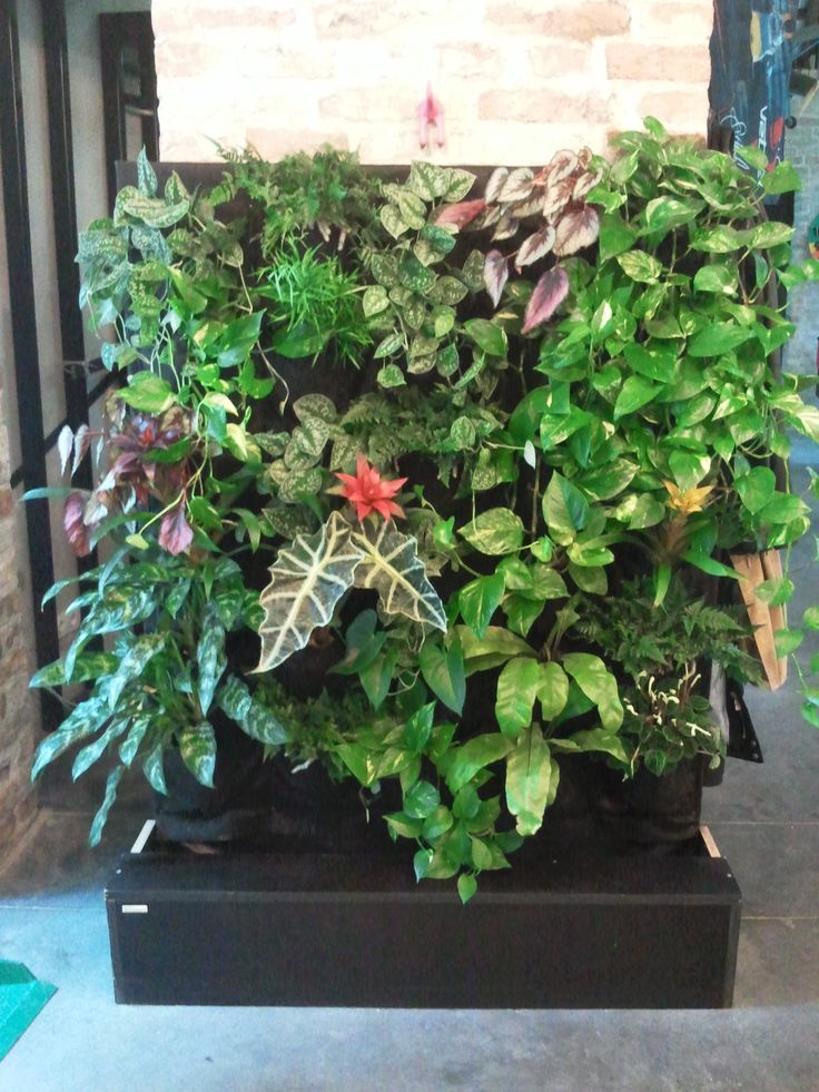 www.zoldlevego.hu Saját fejlesztésű ,zöldfal'  Teherautó platóanyagból készített fa vázra erősítettük a geotextília zsebekbe ültetett növényeket.