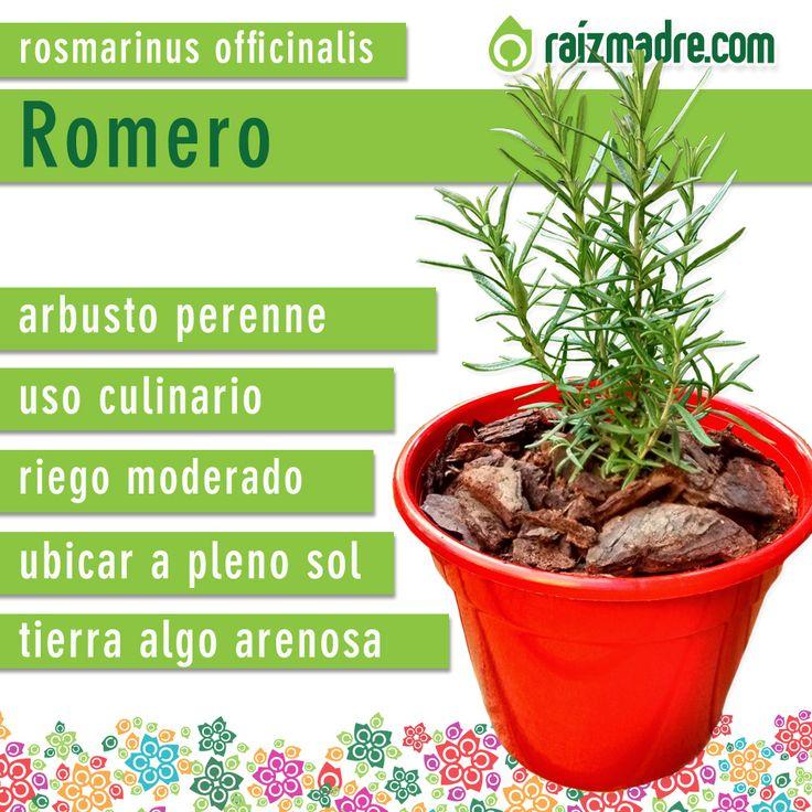 17 images about jard n de plantas arom ticas on pinterest - Plantas aromaticas en la cocina ...