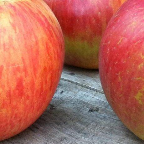 Apple Akane - Fruiting Apple | Southern Woods An attractive red apple with firm flesh and a good flavour. Stores and transports well. Originates from Japan. Very early - first fruiter in January.