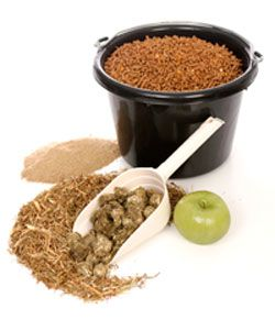 Protein for Your Horse - What are your best sources?