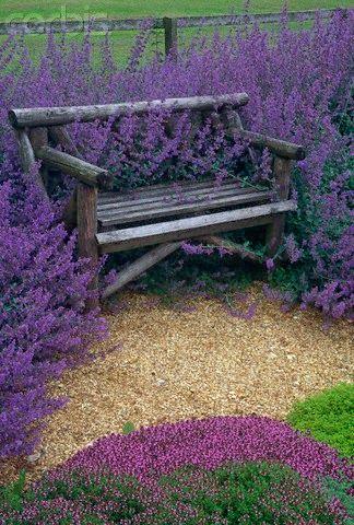 lavender hugging a bench
