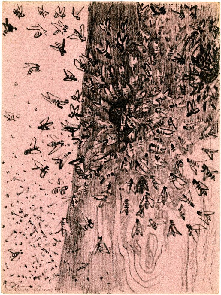 Gertude Hermes - Swarm of bees, 1957. Black felt-tipped pen, on mauve paper