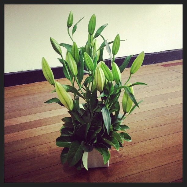 White Oriental Lily Arrangement..