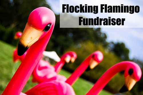 The Flamingo Fundraiser is an outstanding way to raise some laughter and funds. Who knows where the flock will strike next!