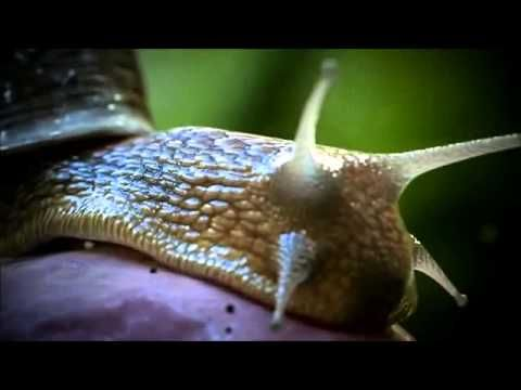 The Secret life of the Snails - YouTube