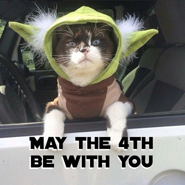 May The 4th Be With You Funny Meme: 17 Best Ideas About Yoda Cat On Pinterest