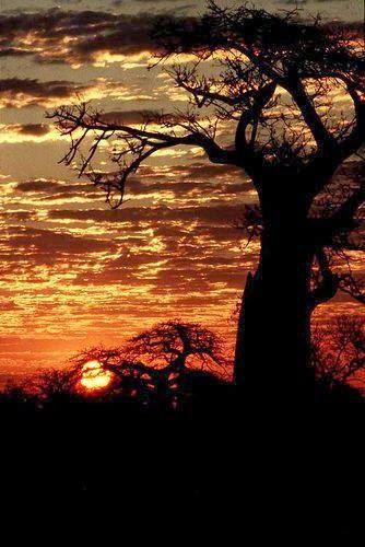 Zimbabwe Sunset, Zimbabwe