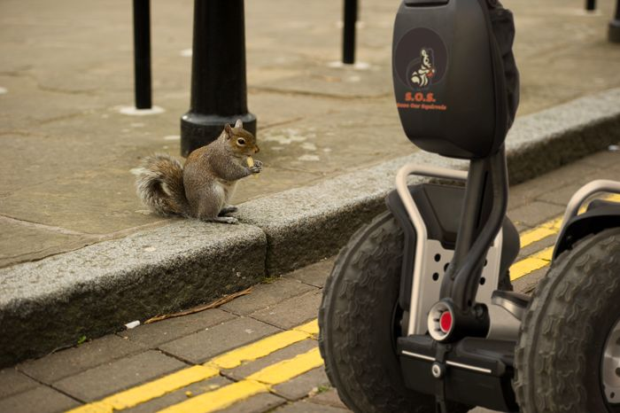 Saving squirrels doesn't just happen in the forests. The #SOS Segway takes the savin' to the streets! #SaveOurSquirrels